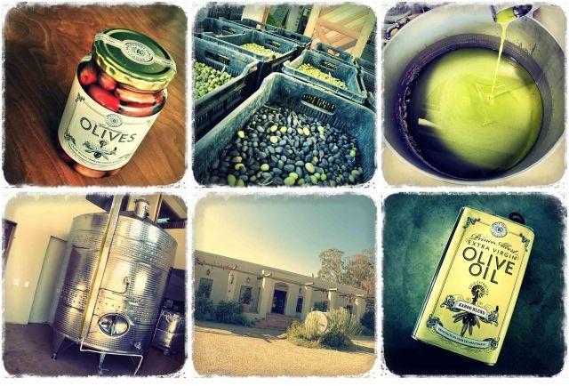 Prince Albert Olives, Karoo Oil
