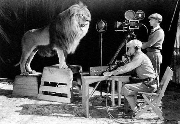 Cinegrafistas gravando e fotografando o famoso rugido do leão para o logotipo da MGM.