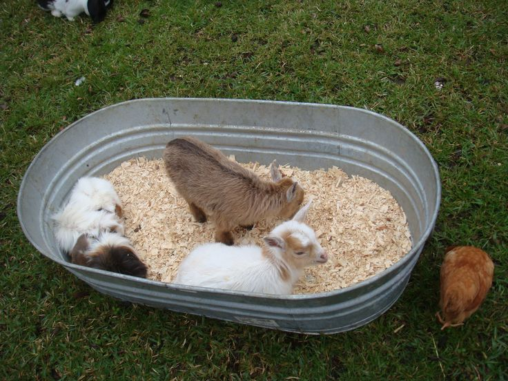 18 best Petting zoo images on Pinterest Farm party Petting zoo