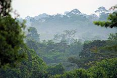 Tropical rainforest climate; Forests and Woodlands in the Ashanti region.