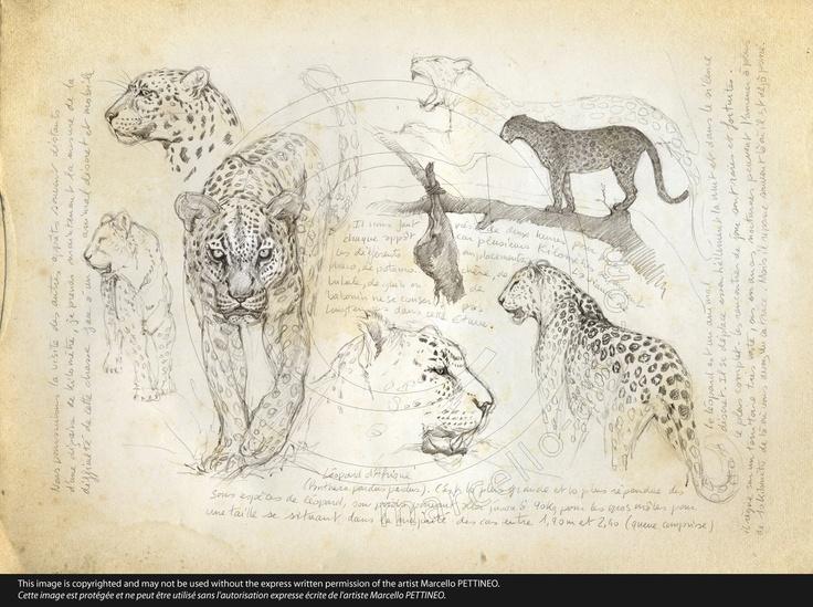 n°07-Leopard-01 © marcello-art.com