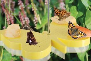 Vlinder voederschaal - voerschaal om vlinders naar de tuin te lokken en vlinders te observeren