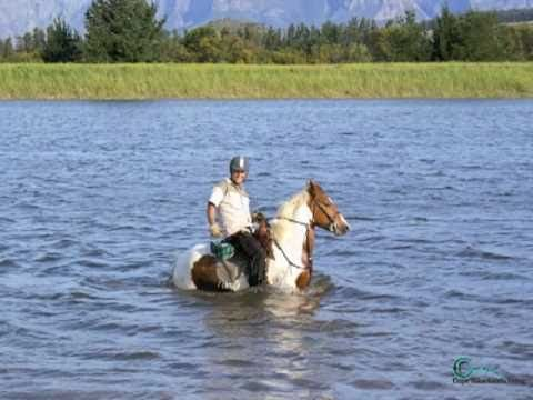 Riding on the beach and along the Cape vineyards.  #FunHolidays #riding #CapeTown #vineyards #beach