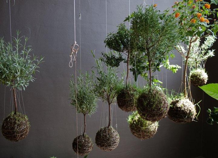 le piante sfidano la gravità!