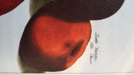 foto van Ruben Haan. Bij De Wolkenfabriek vond ik dit appeltje in een prachtig boek. Zoete Veenappel. Dat klinkt als iets voor Ruben's Garden om te kweken op het veen in Onnen. Even kijken of ik die kan vinden. www.rubensgarden.nl #fruit #veengrond #Onnen #bomen #tuin