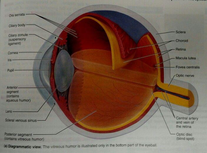 ebook Pre test Neurology
