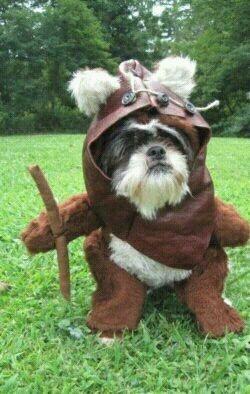 Another Ewok dog!!