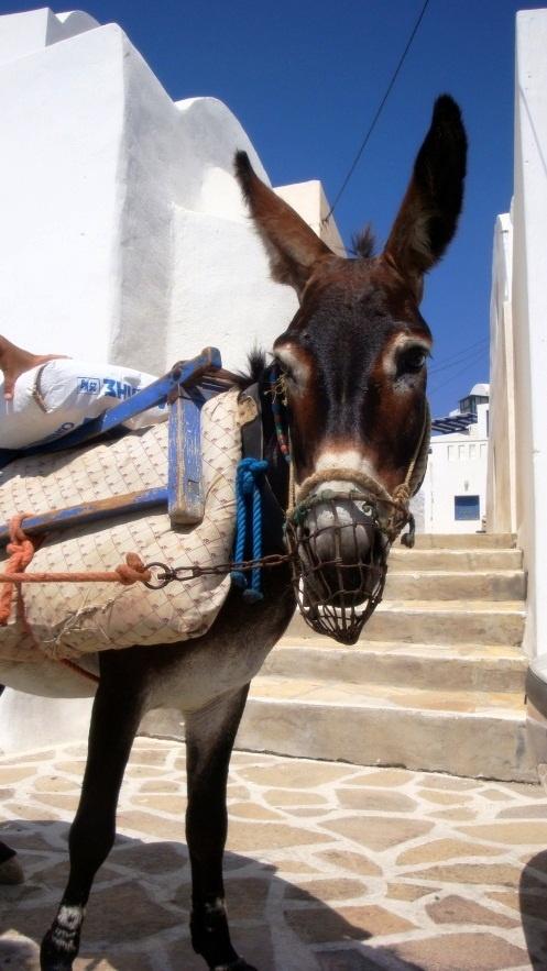 Greece, Greek colours donkey