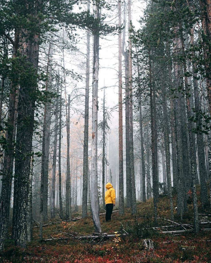 @jannilaakso Lapland trip is over and I want to go back already! 🍂 #watchthisinstagood #instagood10k by @jannilaakso