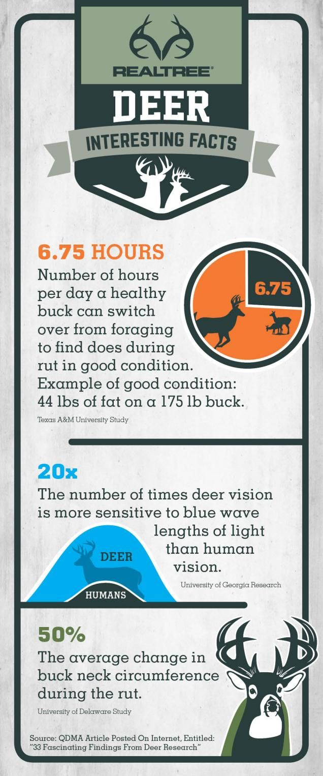 Interesting and fun facts about Whitetail Deer