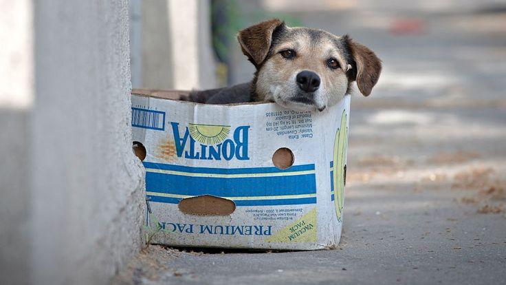 Encontrar um animalna rua é uma das situações mais difíceis paraqualquer pessoaque se sensibiliza com a dor e o sofrimentodos que vivem as margens da s - O que fazer ao encontrar um cachorro na rua