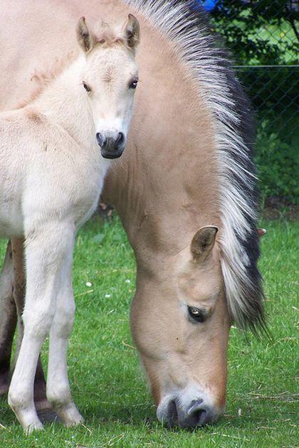 simplemente fotos de caballos