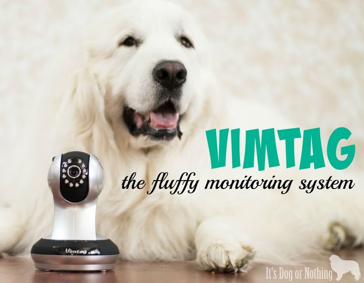 Vimtag: The Fluffy Monitoring System