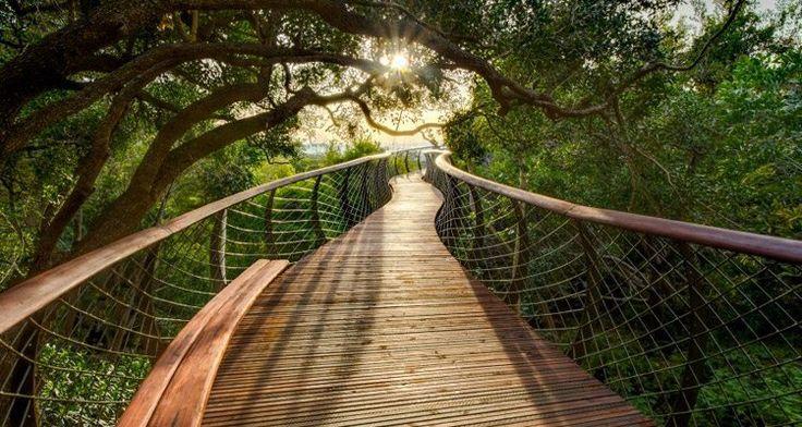 Kirstenbosch Canopy Walk