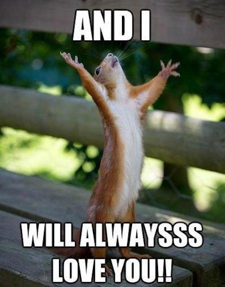 4a565fab7efbbb002ec32a9df49ad3e3 funny squirrel baby squirrel best 25 squirrel memes ideas only on pinterest funny pun names,Funny Squirrel Memes