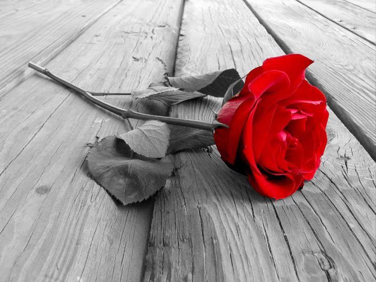Výsledek obrázku pro black and white roses