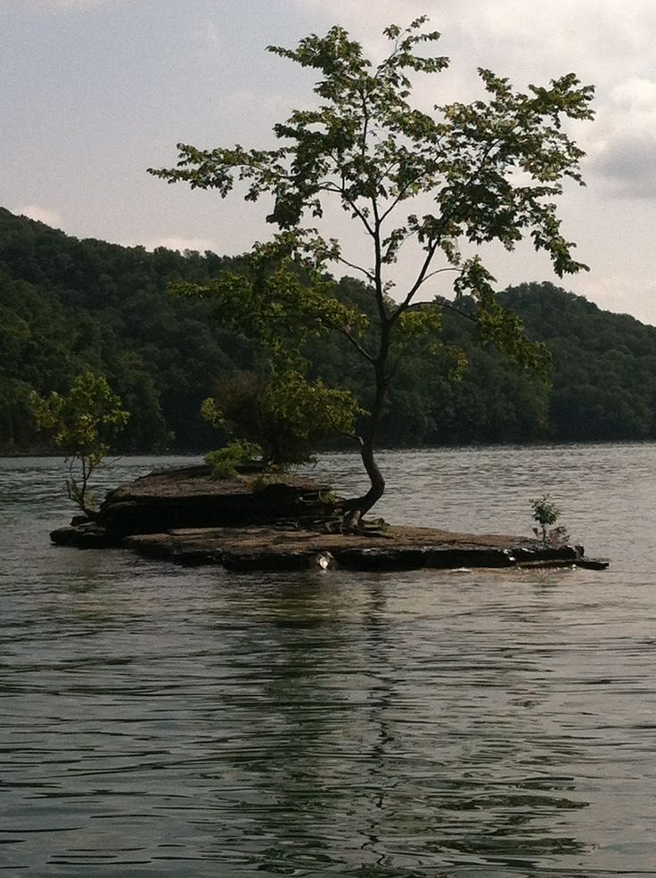 Diver S Island Dale Hollow Lake Places In Ky In 2019