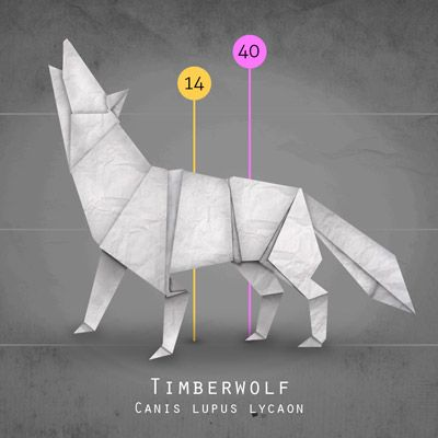 ------------------------------ the wolf in origamis style infographic