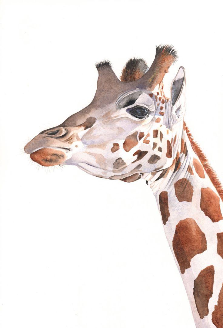 Giraffe Painting -2014- giraffe watercolor painting - print of watercolor painting A3 size largest print by LouiseDeMasi on Etsy https://www.etsy.com/listing/203227402/giraffe-painting-2014-giraffe-watercolor