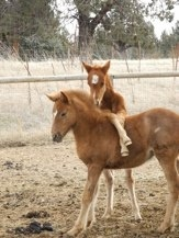 Equine Outreach in Bend rescues abused and neglected horses. Love this organization! carrie512