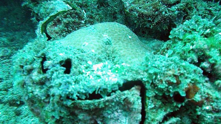 La tridacna gigante (Tridacna gigas) è il più grande mollusco bivalve esistente: può raggiungere il metro e mezzo di lunghezza e superare i 300 kg di peso. L'habitat di questo mollusco è limitato all'Oceano Pacifico occidentale, nelle aree della Malesia, dell'Indonesia e dell'Australia (Grande barriera corallina). Vive nelle scogliere fino a 15 m di profondità.... Read more »