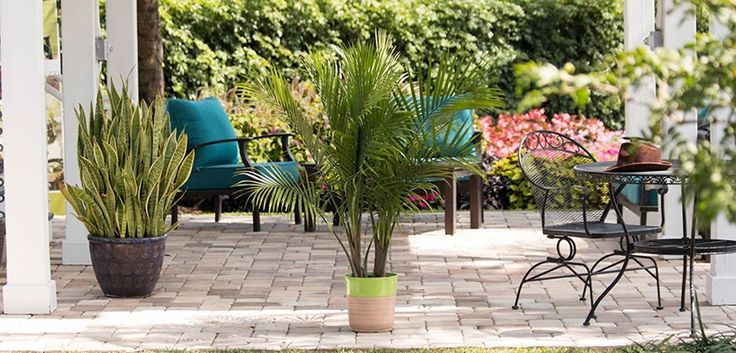 12 Best Images About Palm Tastic Patios On Pinterest