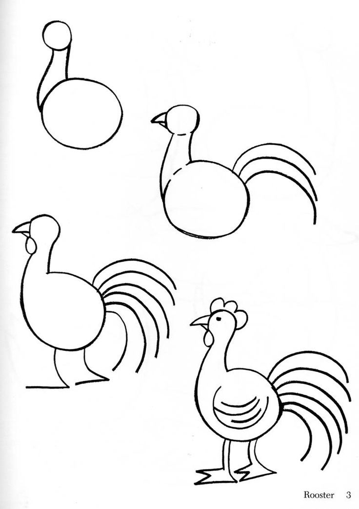 How to draw a chicken or hen
