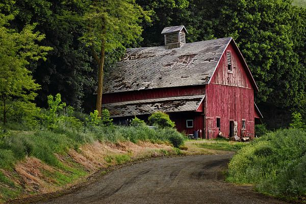 """""""Red Barn, Country Road"""" by Nikolyn McDonald Photography is a classic rural American scene: a rustic farm building painted red on the curve of a dirt road.  This old building is located in the countryside of southeastern Washington. siding,wood,wooden,outdoors,outside,vintage,window,door,cupola,loft,trees,summer,weathered,nikki,"""