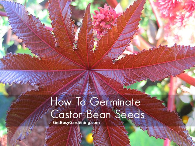 how to make beans grow faster