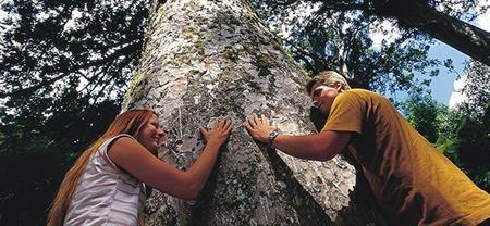 Guided Kauri Forest Experience   Coromandel Adventures   Coromandel Town Tours & Activities   Coromandel Peninsula.