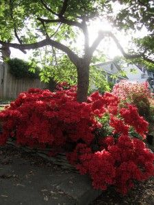 10 plants that grow well under trees - Flower Garden Ideas For Under A Tree