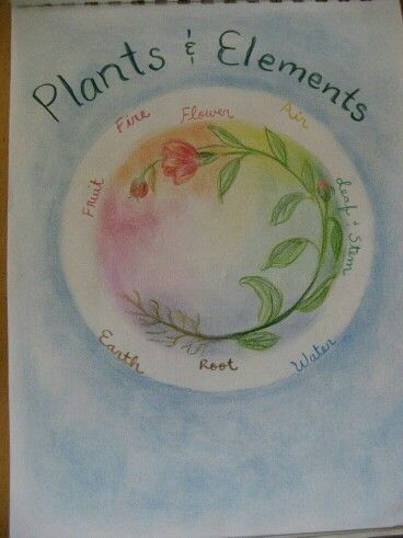 Plants circular design with 4 elements