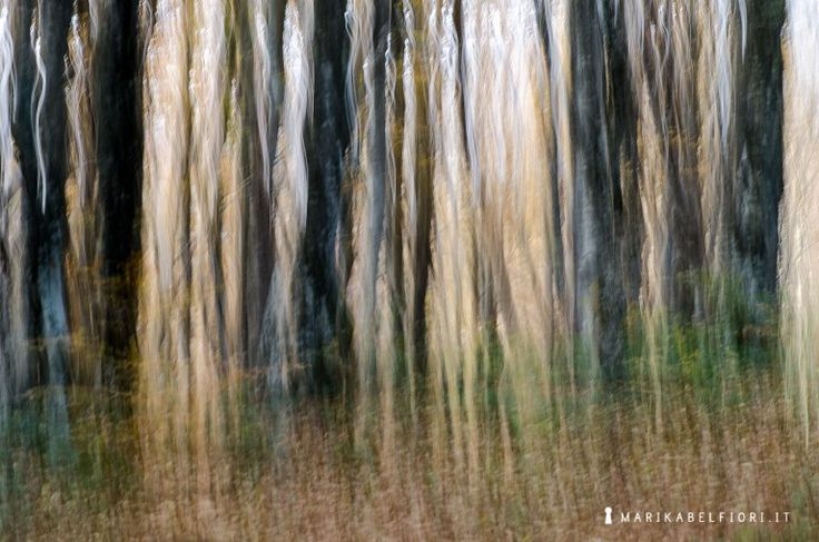 Autunno - Fall trunk, vertical pan technique - Ph Marika Belfiori l Mosso volontario