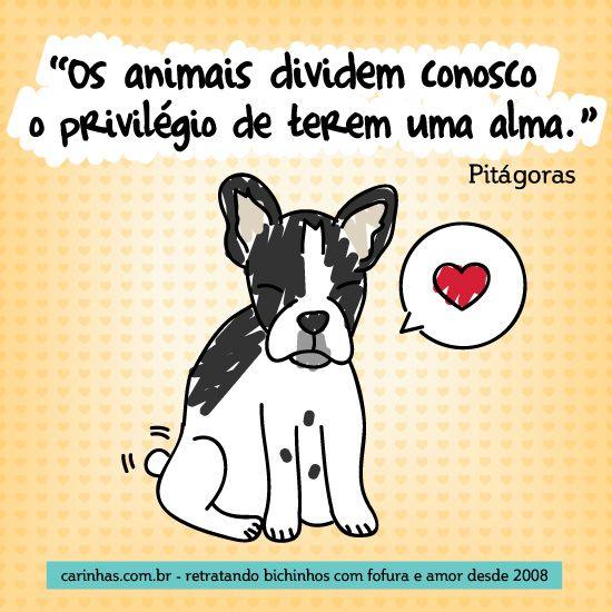 """""""Os animais dividem conosco o privilégio de terem uma alma."""" Pitágoras"""
