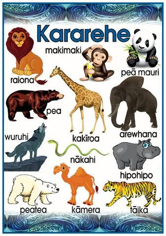 Māori Wild Animals