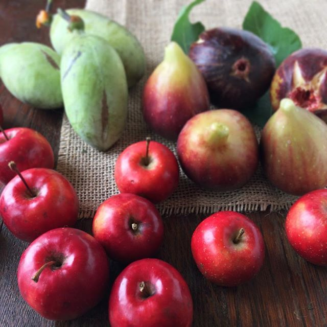 ・ 直売所でいろいろ買ってきましたー(^^) ・ 果樹のポポーは初めてですが、どんな味か楽しみです😋 ・ ちなみに手前は姫リンゴです🍎 ・ #フルーツ #fruit #秋 #食欲の秋 #autumn #姫リンゴ #ひめりんご #いちじく #ポポー #fig #apple #delicious #colorful