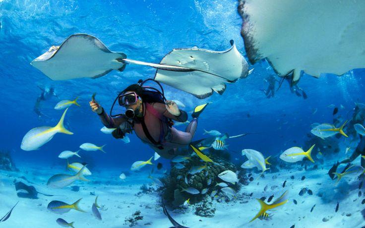 Tobago. #scuba #diving #tobago