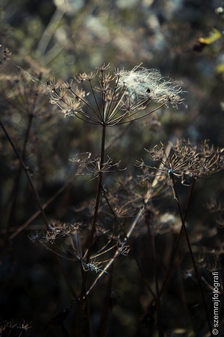 autumn is coming by szemrajfotografi szemrajfotografi on 500px