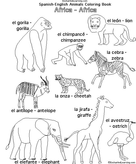 African Animals In Spanish