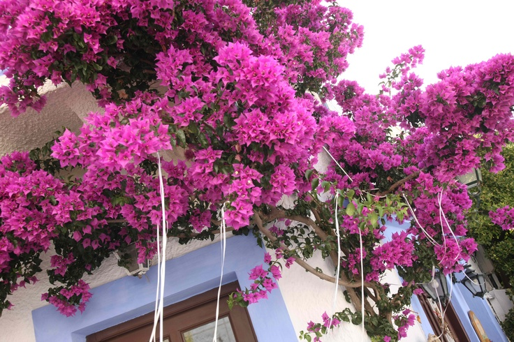 Alonnisos Greece
