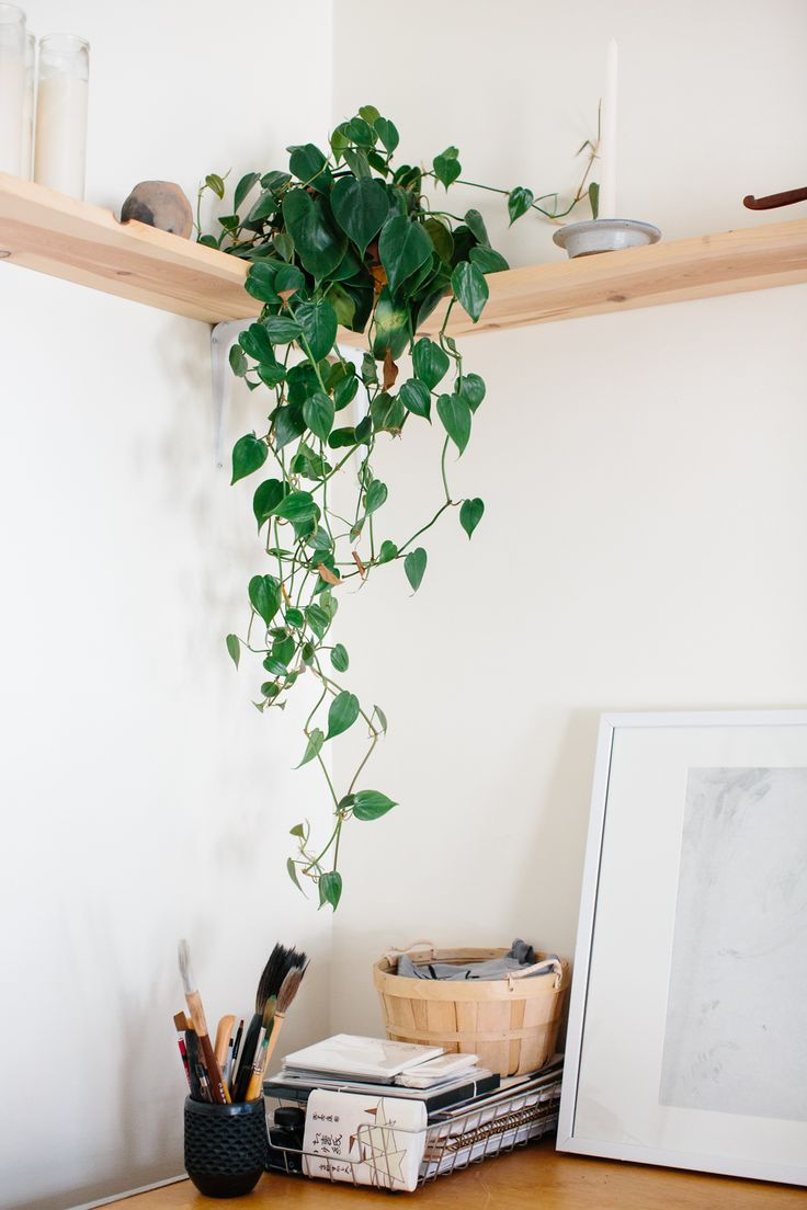 Best 25 golden pothos ideas on pinterest house plants indoor plant decor and indoor tree plants - Corner shelf for plants ...