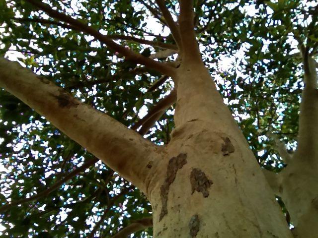 its a  tree #tree