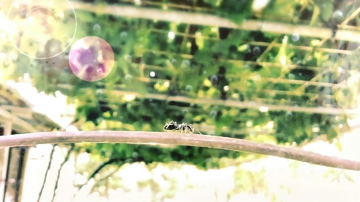Just a cute ant photo was edited with PhotoDirector