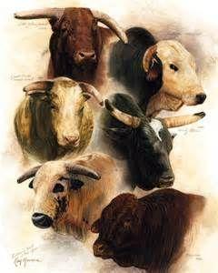 pbr bucking bulls - Bing Images