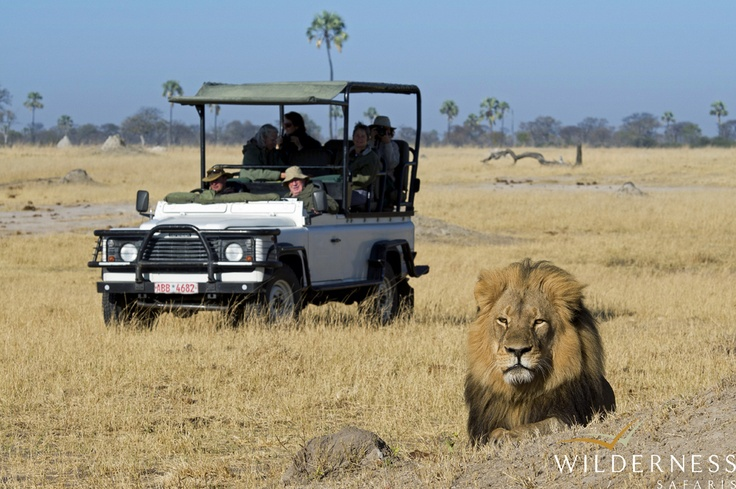 Davison's Camp - The king surveys his kingdom.  #Africa #Safari #Zimbabwe