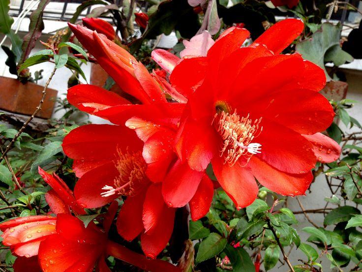 https://flic.kr/p/DoYRQf | Flor del baile