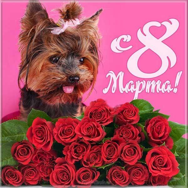 Поздравление с 8 марта открытка фото, картинку надписью про