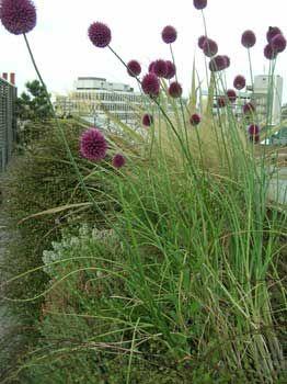 Shoreditch roof garden