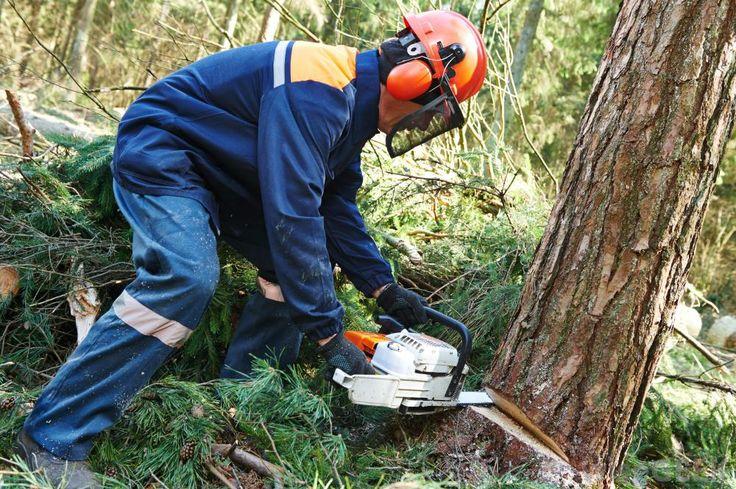 10 Tree Cutting Techniques  #treecutting #treecuttingbrisbanesouthside