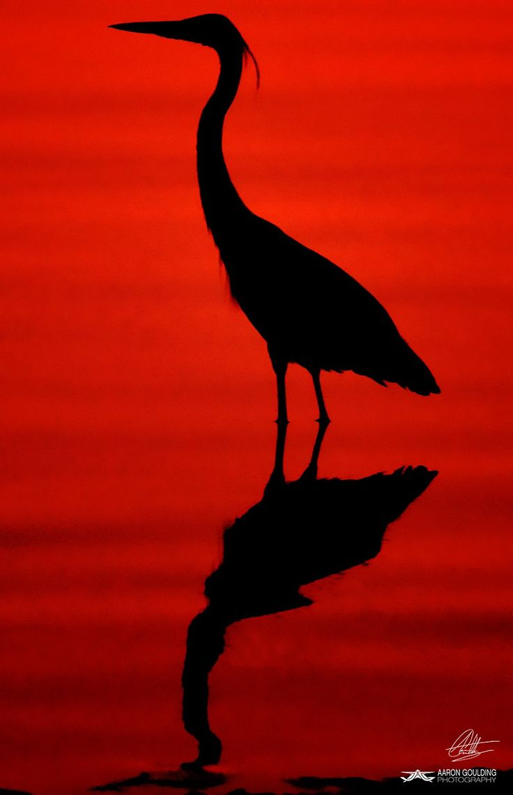 Red Velvet Salton Sea State Recreation Area Salton Sea